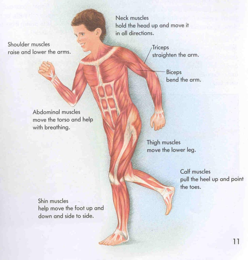 Skeletal And Muscular Systems What Moves You Pdf