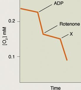 Rotenone inhibits complex I of the electron transport chain and thereby inhibits respiration.