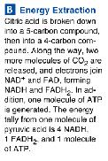 forming CO2, and electrons