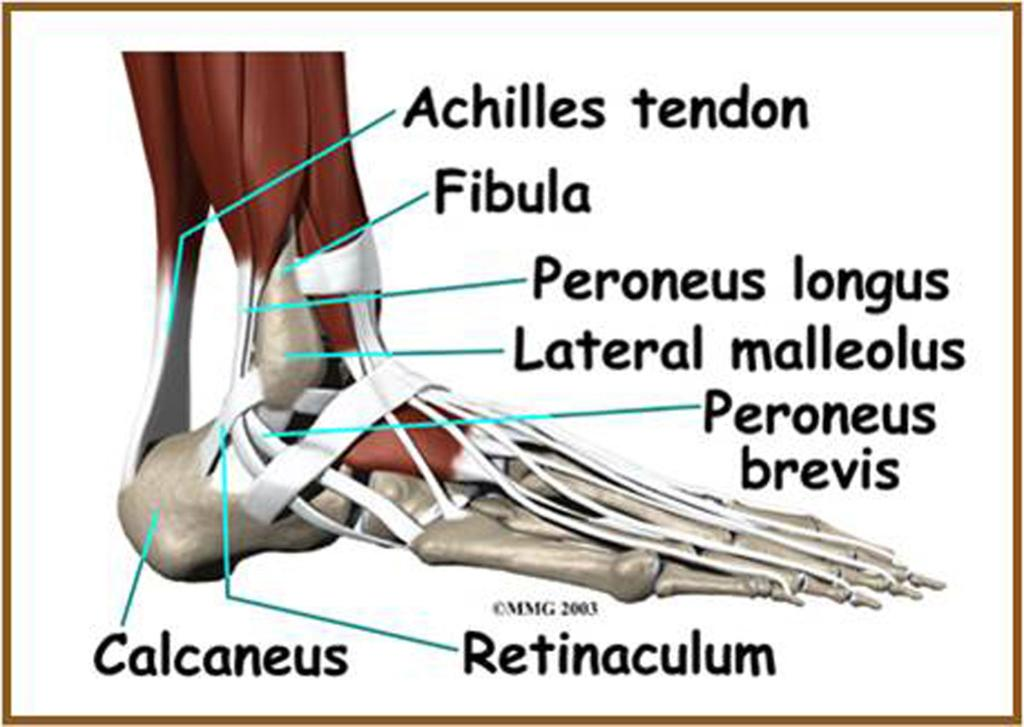 Lateral ankle pain: what is the problem? - PDF