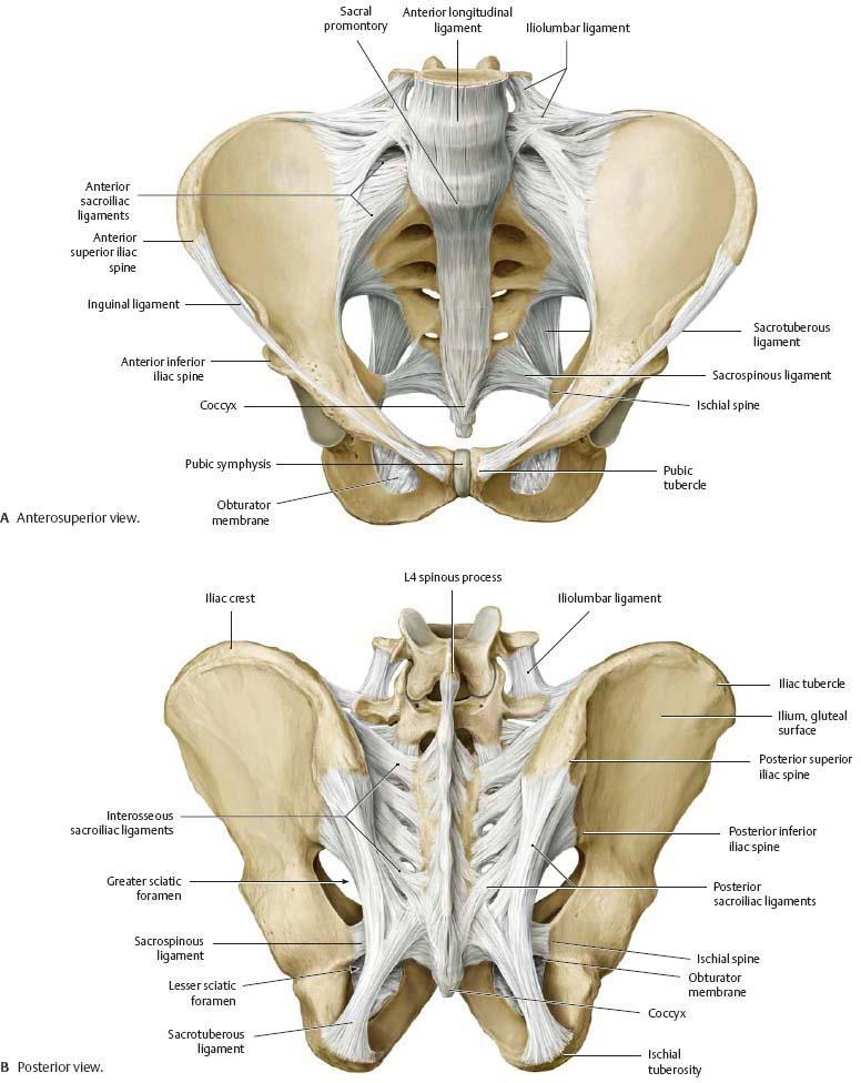 Skeletal System Structural support, movement, mechanical protection ...