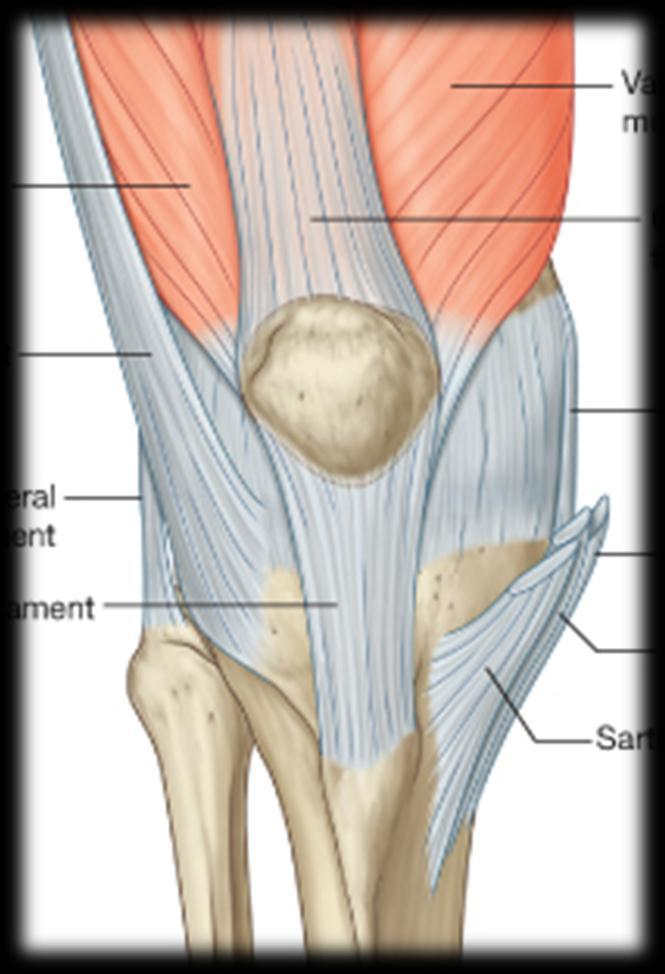 To describe he knee joint, ligaments, structure & To list the main ...