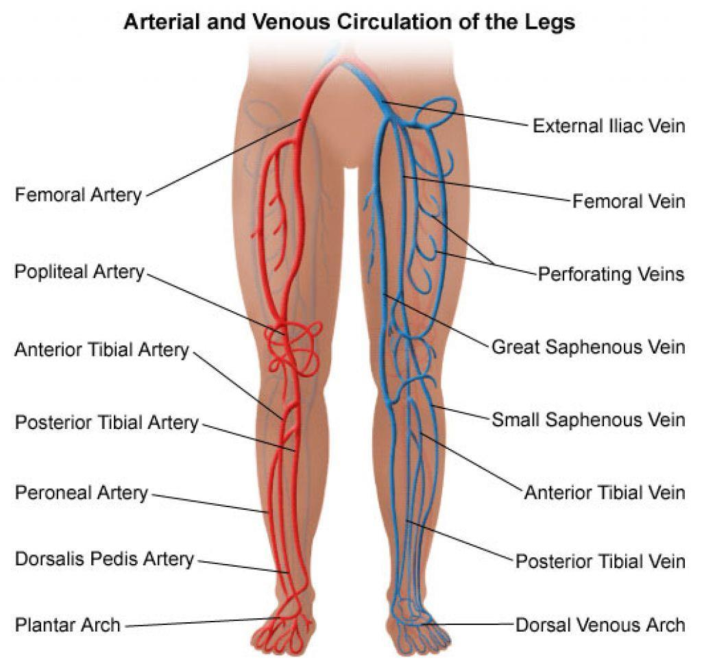 ACVP s RCIS Review Course: Coronary and Vascular Anatomy, Physiology ...