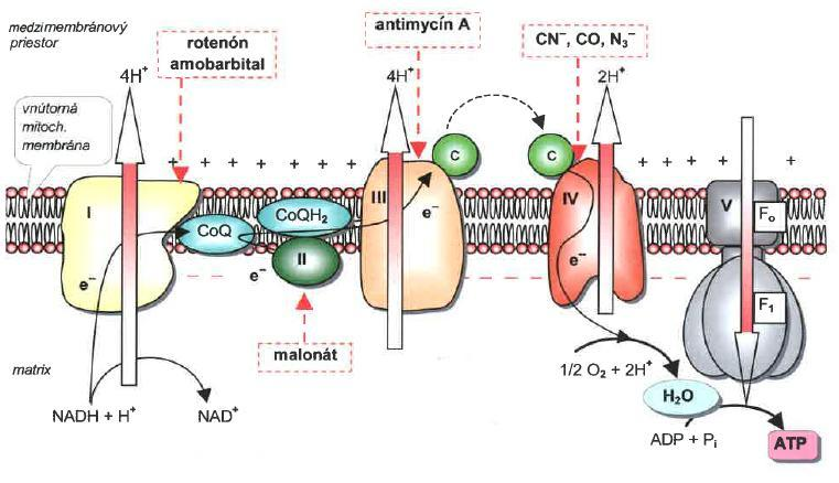 Inhibitors of respiratory chain intermembrane space piericidin