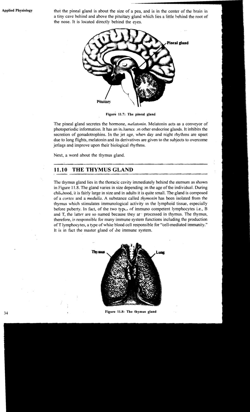 Physiology Of The Endocrine Glands Pdf