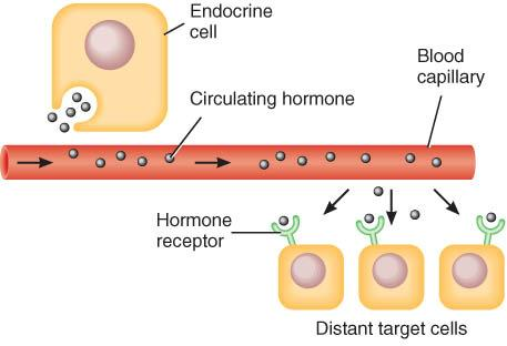 11/26/2007. The Endocrine System. The Endocrine System. NERVOUS and ...