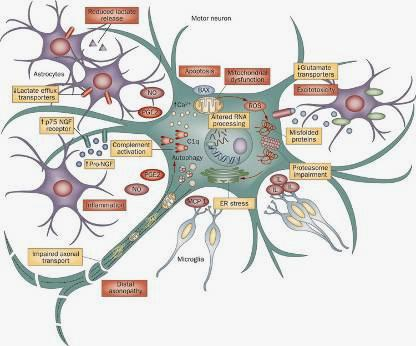 Research of brain science Cellular and molecular levels Biomics