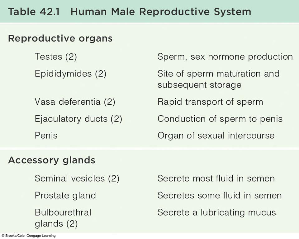 Animal Reproductive Systems. Chapter 42 - PDF