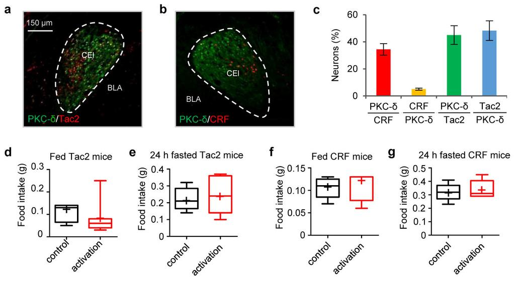 Supplementary Figure 10 Activation of Tac2 or CRF neurons in CEl does not inhibit feeding a-b. Expression of Tac2 (a) or CRF (b) and PKC-δ (antibody staining) in CEl.