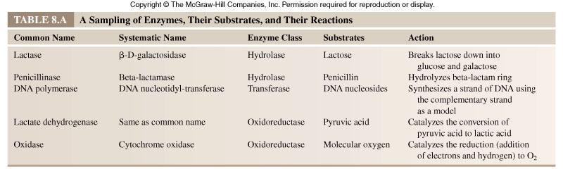 Examples of oxidoreductase, transferase, and hydrolytic enzymes.
