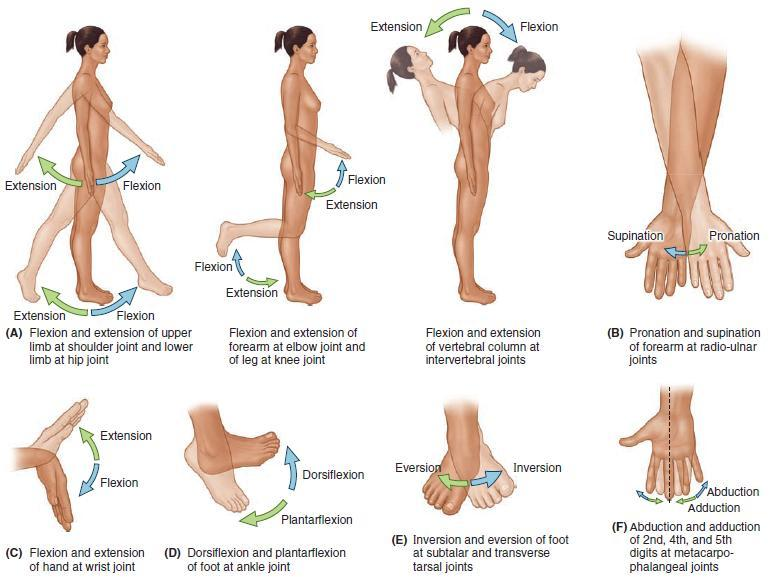 Unit I Problem 5 Anatomy Types Of Movements And Joints Pdf