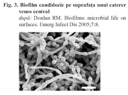 The BIOFILM Surface-associated microorganisms Feature of unicellular organisms to adhere to surfaces Escape the